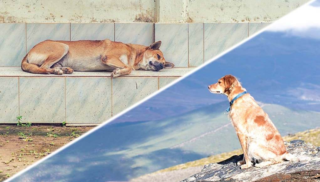 The Best and Worst Countries for Dogs