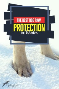 The Guide to Best Dog Paw Protection in the Winter