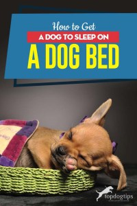 Tips on How to Get Your Dog to Sleep on a Dog Bed