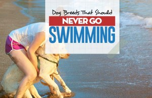 Top 20 Dog Breeds Worst at Swimming