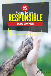 Top 25 Ways to Be a Responsible Dog Owner