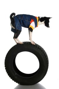 Training or Obedience for Bored Dogs