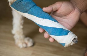 What to Do If Your Dog Pulled a Muscle