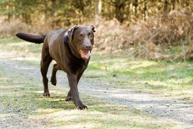 What to Do When a Dog Pulled a Muscle