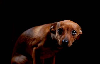 10 Things Dogs Are Scared of the Most