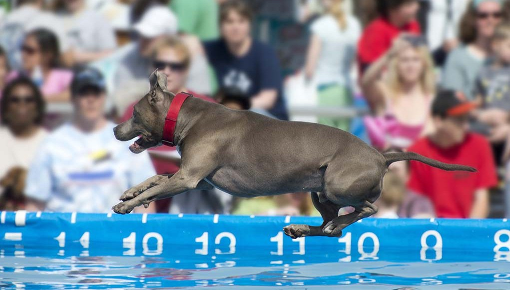 11 Dog Sports Your Active Dog Can Compete In