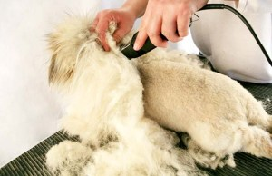 7 Tips for Shaving a Double Coated Dog