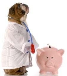 Consider Pet Insurance