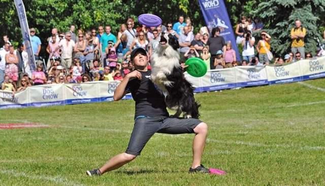 Disc Dog Canine Sport