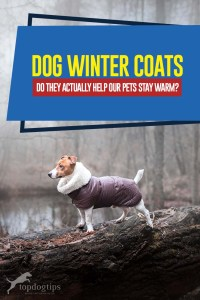 Guide on Dog Winter Coats - Do They Actually Help Our Pets Stay Warm