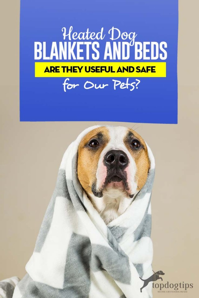 Guide on Heated Dog Blankets and Beds - Are They Useful and Safe for Our Pets