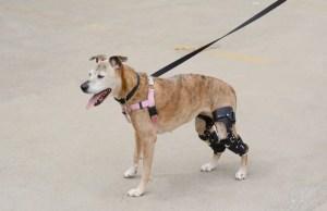How To Make A Dog Knee Brace