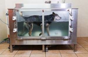 Hydrotherapy and Underwater Treadmill for Dogs
