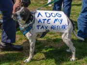 IRS Tax Deductions for Dog Owners
