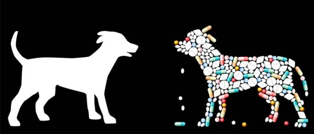 Ingredients of Muscle Supplements for Dogs