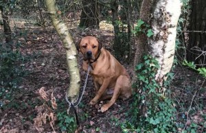 Person Tied a Terrified Dog to a Tree and Left Him There to Die