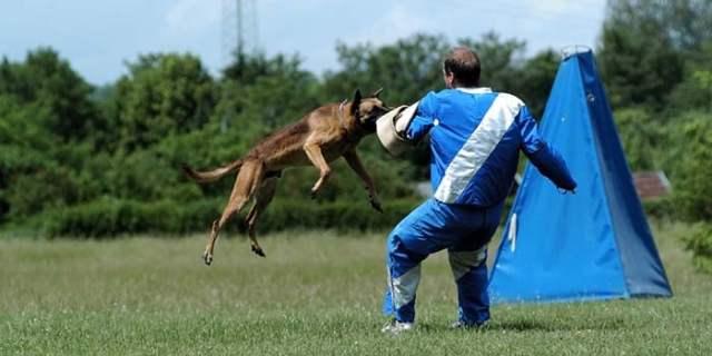 Schutzhund Sport for Dogs