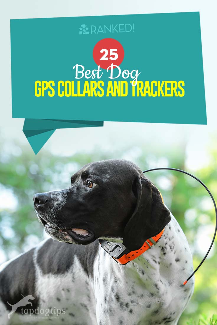 The 25 Best Dog GPS Collar Trackers