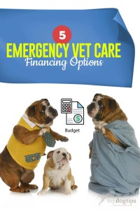The 5 Emergency Vet Care Financing Options