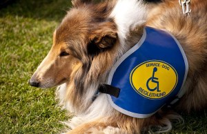 The Complete Guide to Different Types of Assistance Dogs