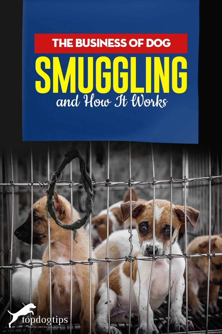 The Cruel Business of Dog Smuggling and How It Works