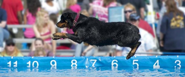 The Sport of Dock Jumping