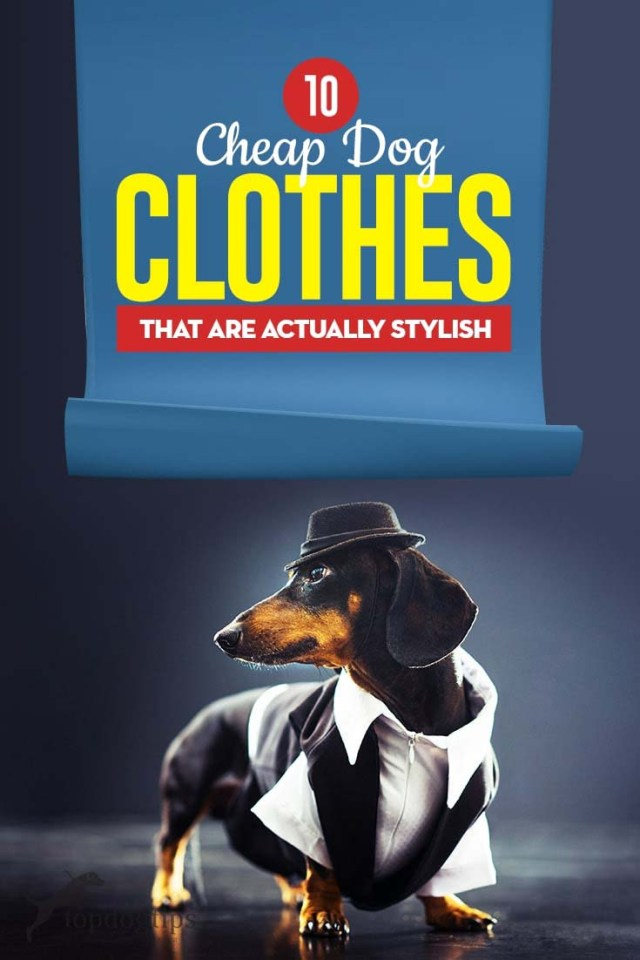 Top 10 Cheap Dog Clothes That Are Actually Stylish