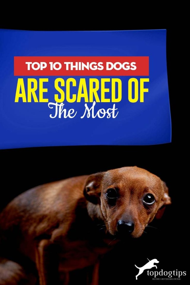 Top 10 Things Dogs Are Scared of the Most