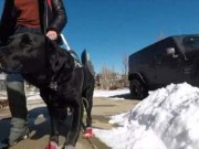 Uber Driver Refuses a Woman Because of Her Guide Dog