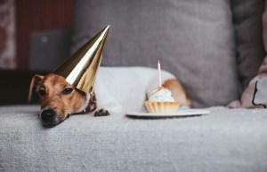 What Are Dog Years (And How to Know How Old Your Pup Is)