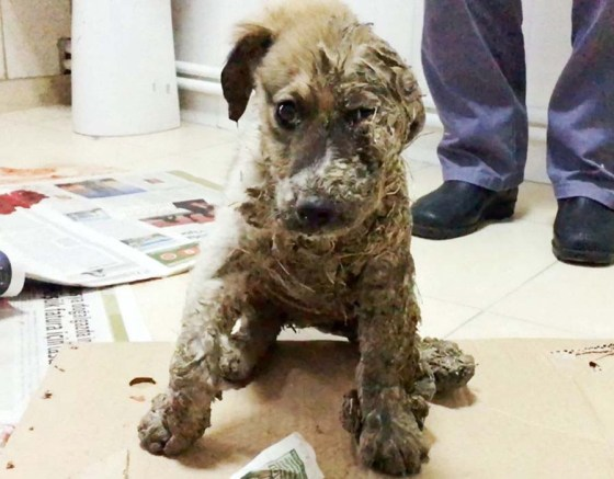Why Dog Smuggling Is an Animal Welfare Issue