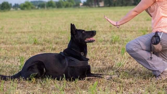 10 Focal Points Canine Good Citizen Program