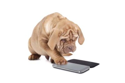 Apps for Dogs (and Their Humans)