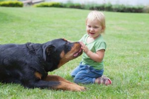 Canine Socialization and Introduction