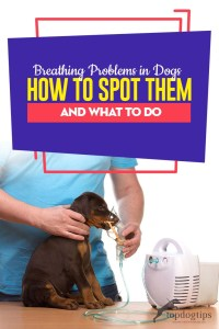 Common Breathing Problems in Dogs - How to Spot Them and What to Do