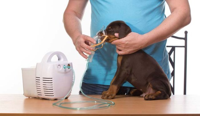 How to Treat Dog Breathing Issues