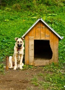Indoor and Outdoor Dogs, Should You Say Something