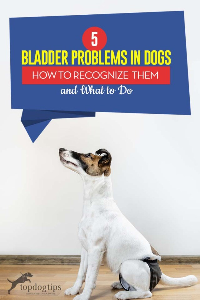 Most Common Bladder Problems in Dogs