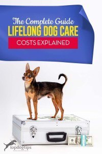 The Guide to Lifelong Dog Care Costs