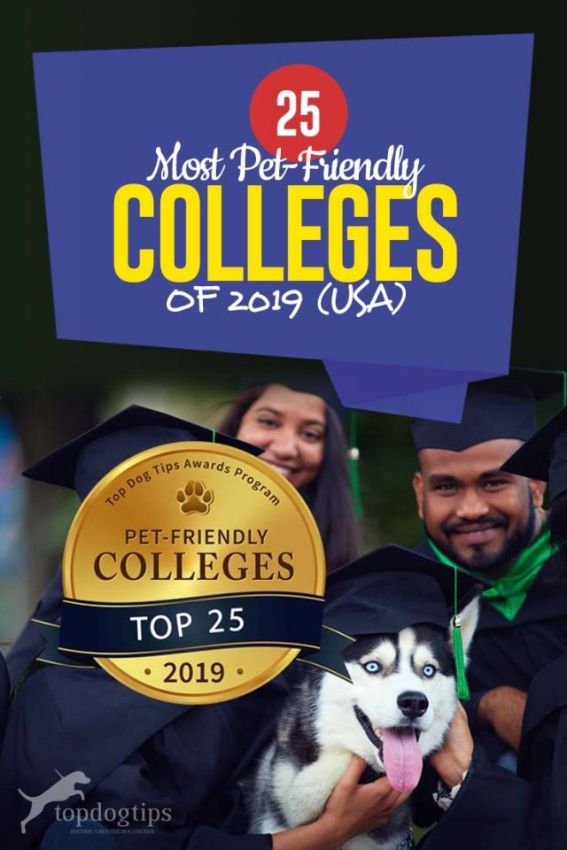 Top 25 Most Pet-Friendly Colleges of 2019 (USA)