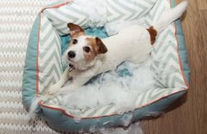 Top 6 Best Chew Resistant Dog Beds