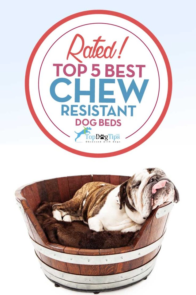 Top Rated Chew Resistant Dog Beds
