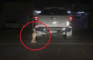 Video - Man Cruelly Dragged a Dog Tied to His Moving Truck