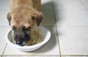 What Can I Give My Dog for Diarrhea