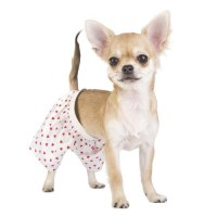 What Kind of Dog Needs Pajamas