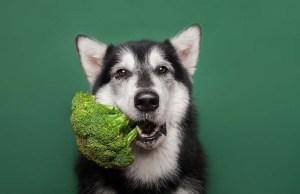 10 Best Homemade Vegan Dog Food Recipes