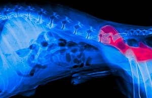 5 Signs of Hip Problems in Dogs (And What to Do)