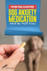 Best Tips on Using Over the Counter Dog Anxiety Medication