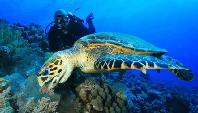 Marine Biology (Biological Oceanography)