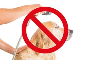 Protect Your Dog's Ears and Eyes When Bathing